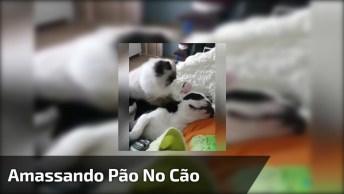 Gatinho Fazendo Massagem No Cachorro, Olha Só Que Coisinha Mais Fofa!