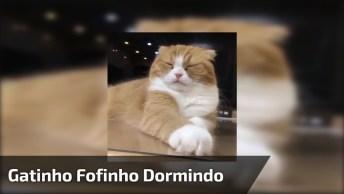 Gatinho Fofinho, Compartilhe Se Você Também É Apaixonada Por Gatos!