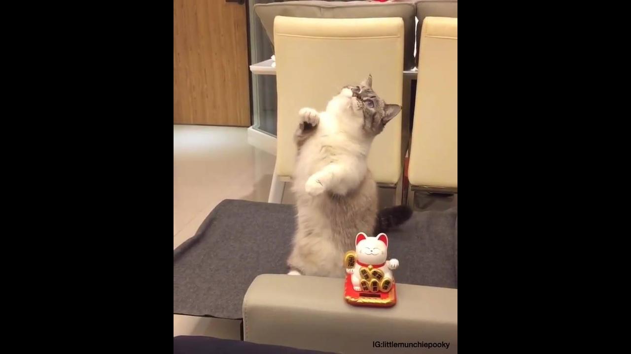 Gatinho fofinho imitando Maneki Neko