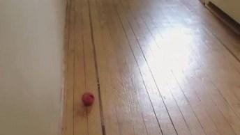 Gatinho Fofo Brincando Com Uma Bolinha, Olha Só Como Eles Gosta, Hahaha!