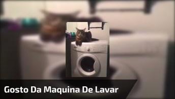 Gatinho Gosta De Ficar Em Cima Da Maquina De Lavar, Olha Só A Carinha Dele!