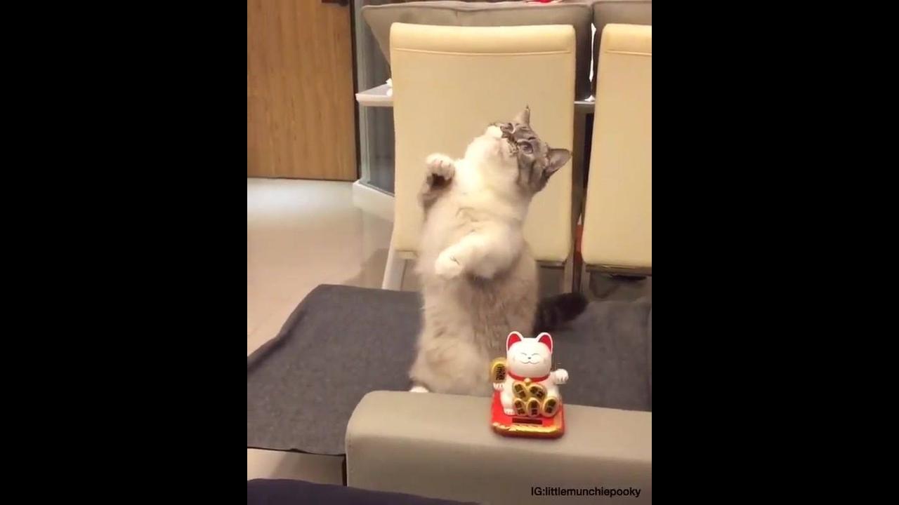 Gatinho imitando gatinho de enfeite
