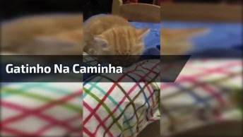 Gatinho Indo Para Caminha Dormir, Olha Só Que Fofura Gente!
