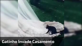 Gatinho Invade Casamento Para Pular No Vestido Da Noiva, Confira!