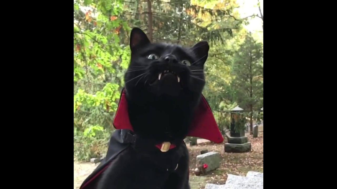 Gatinho já esta fantasiado para noite de Halloween