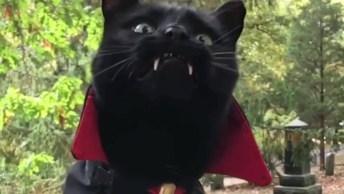 Gatinho Já Esta Fantasiado Para Noite De Halloween, Olha Só A Carinha Dele!