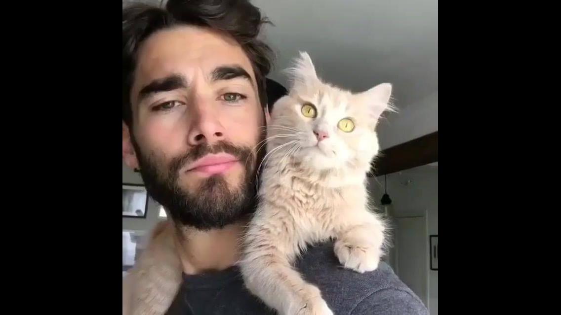Gatinho lindo brincando com seu humano