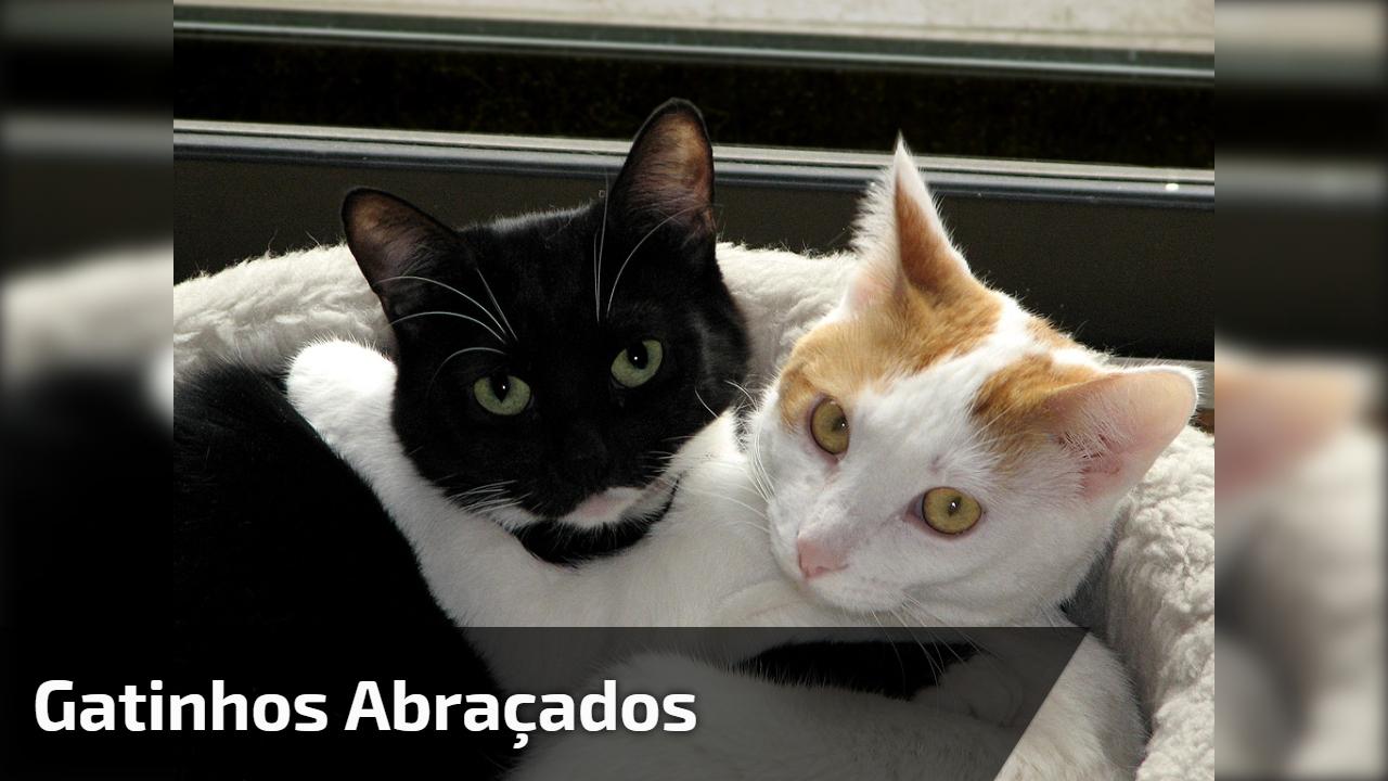 Gatinhos abraçados