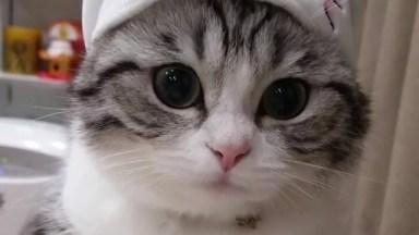 Gatinho Mais Lindo Que Você Vai Ver Hoje, Olha Só Esta Carinha!