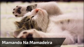 Gatinho Mamando Na Mamadeira, Veja Que Linda Princesa De Coroa!