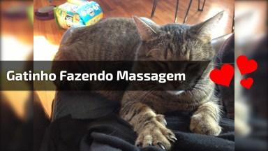 Gatinho Massagista! Veja A Concentração Dele Fazendo Massagem!