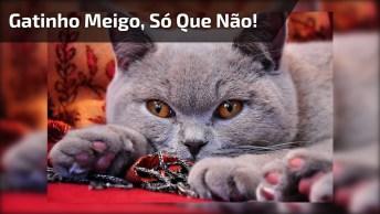Gatinho Meigo, Só Que Não, Hahaha! Olha Só O Que Este Gato Faz Com Brinquedinho!