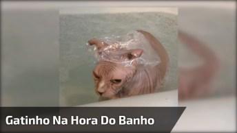 Gatinho Na Hora Do Banho Com Toquinha Para Não Molhar Ouvidinho!