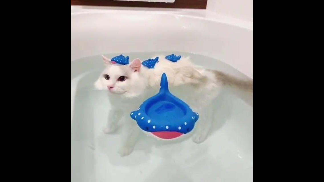 Gatinho na hora do banho