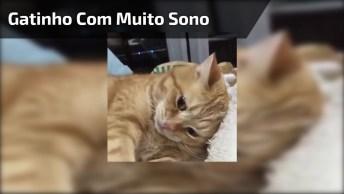 Gatinho Não Consegue Abrir Os Olhos De Tanto Sono, Olha Só A Carinha Dele!