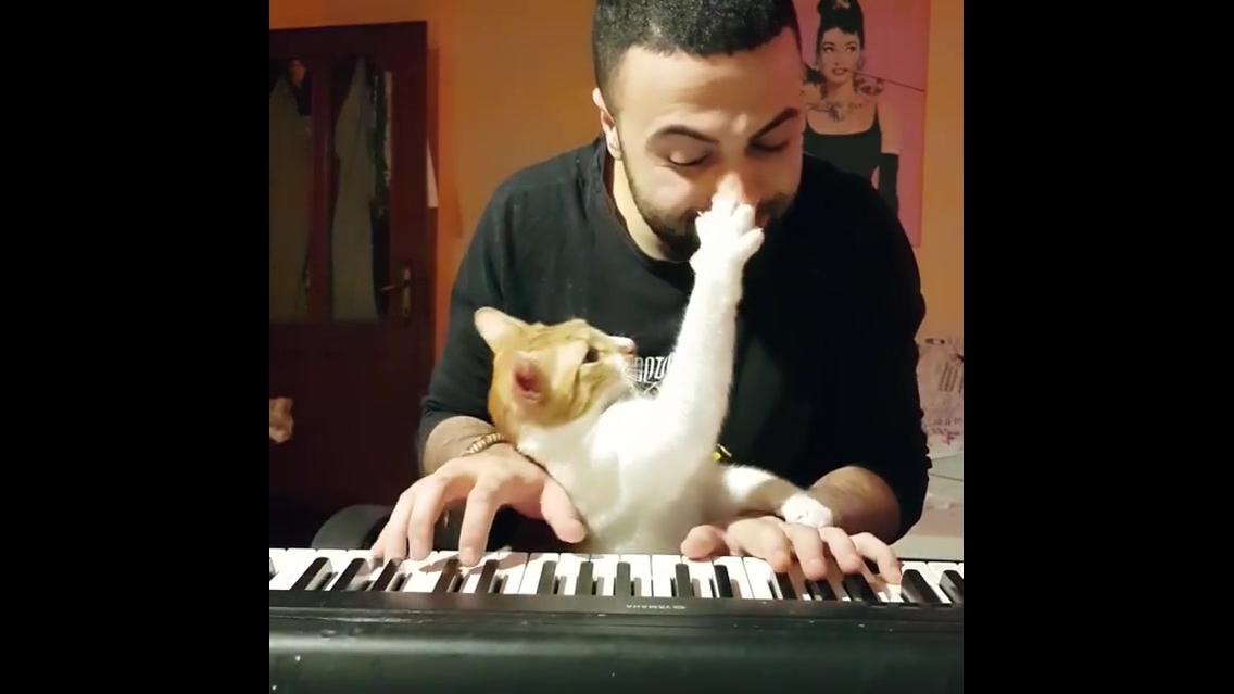 Gatinho não deixa seu dono tocar teclado