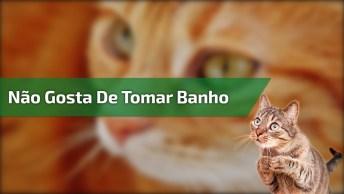 Gatinho Não Gosta De Tomar Banho, Olha Só O Drama Que Ele Faz!