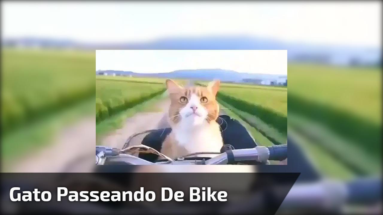 Gato passeando de bike