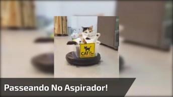 Gatinho Passeando No Aspirador Móvel, Olha Só A Carinha Dele!