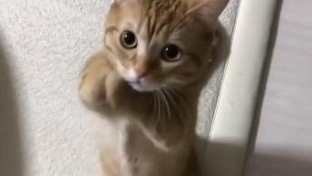 Gatinho Pedindo Com As Patinhas, Mais Um Vídeo De Gato Fofo!