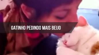 Gatinho Pedindo Mais Beijo, Tem Animal Mais Fofo Que Gatos?