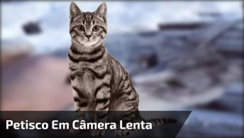 Gatinho Pegando Petisco Em Câmera Lenta, Veja Que Lindo Este Animal!