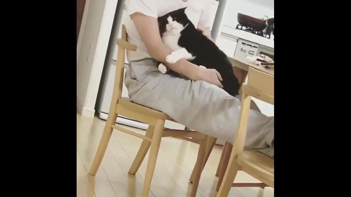 Gatinho pula no colo de dono, e abraça o braço dele