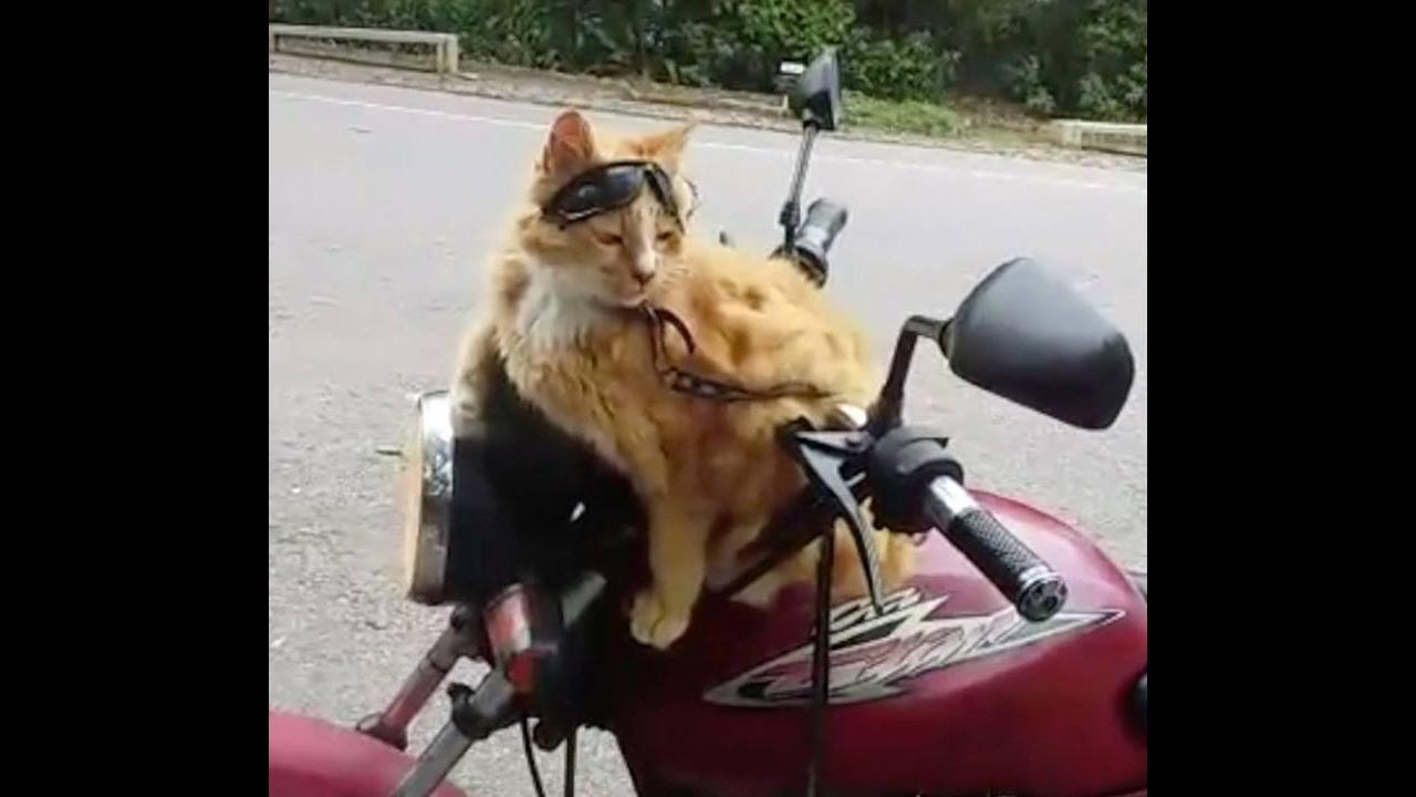 Gatinho que adora andar de moto