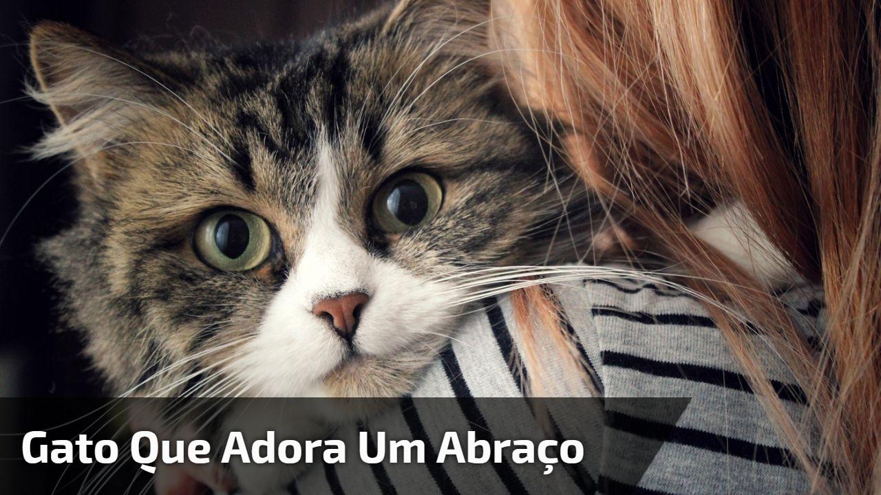 Gato que adora um abraço