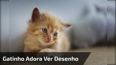 Gatinho Que Adora Ver Desenho No Celular, Olha Só A Carinha Dele!