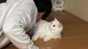 Gatinho Recebendo Carinho De Seu Tutor, Os Gatinhos São Muito Fofinhos!