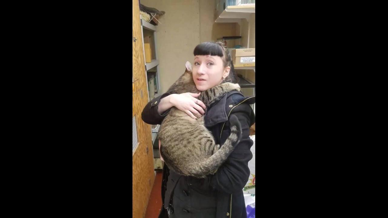 Gatinho recebendo carinho, olha só como gosta de um colo