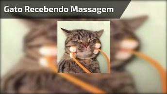 Gatinho Recebendo Massagem, Da Até Vontade De Ser Um Gato!