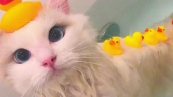 Gatinho Relaxando Na Banheira Com Seus Patinhos De Borracha!