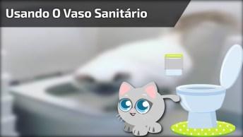 Gatinho Sabe Usar O Vaso Sanitário, Como É Inteligente Este Amiguinho!