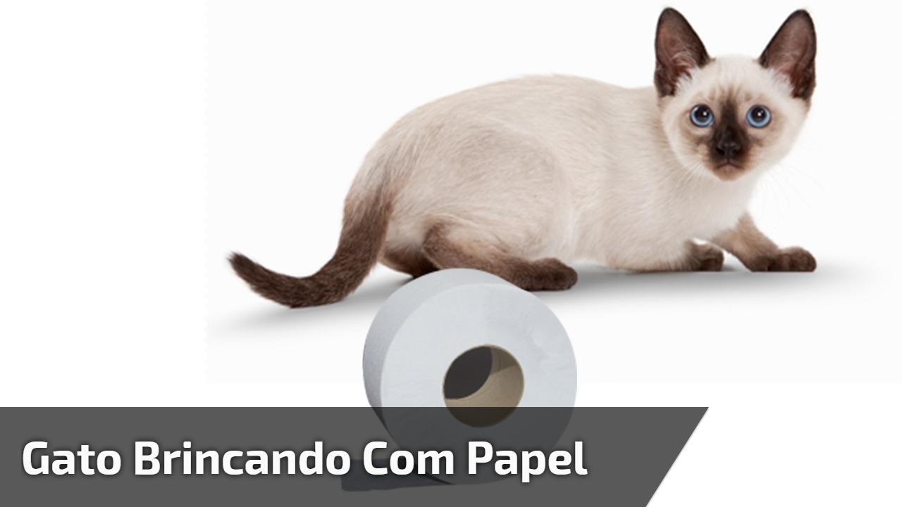 Gato brincando com papel