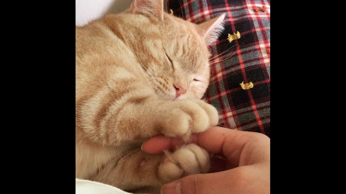 Gatinho segurando a mão de sua humana