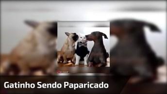 Gatinho Sendo Paparicado Por Dois Cães, Olha Só A Carinha Dele, Hahaha!