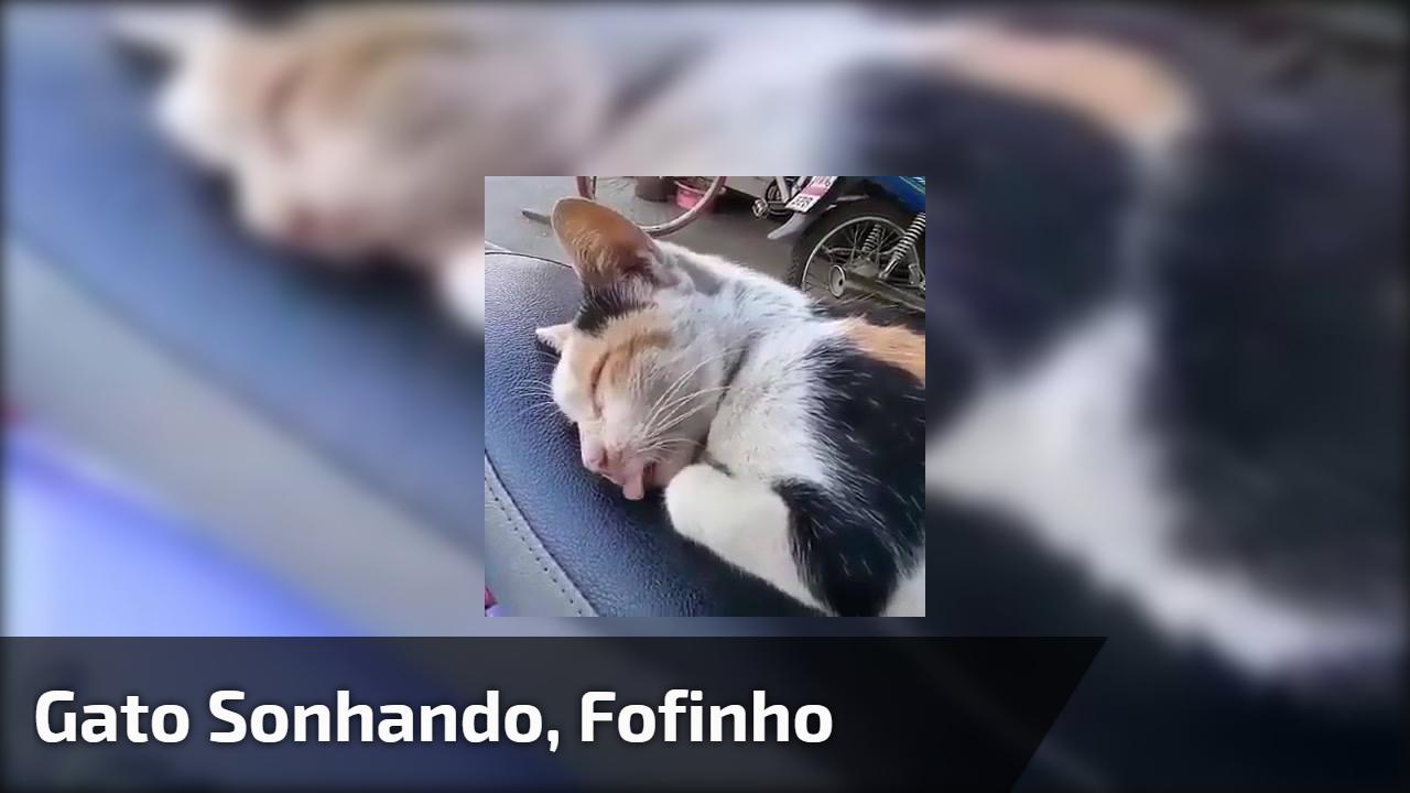 Gato sonhando, fofinho