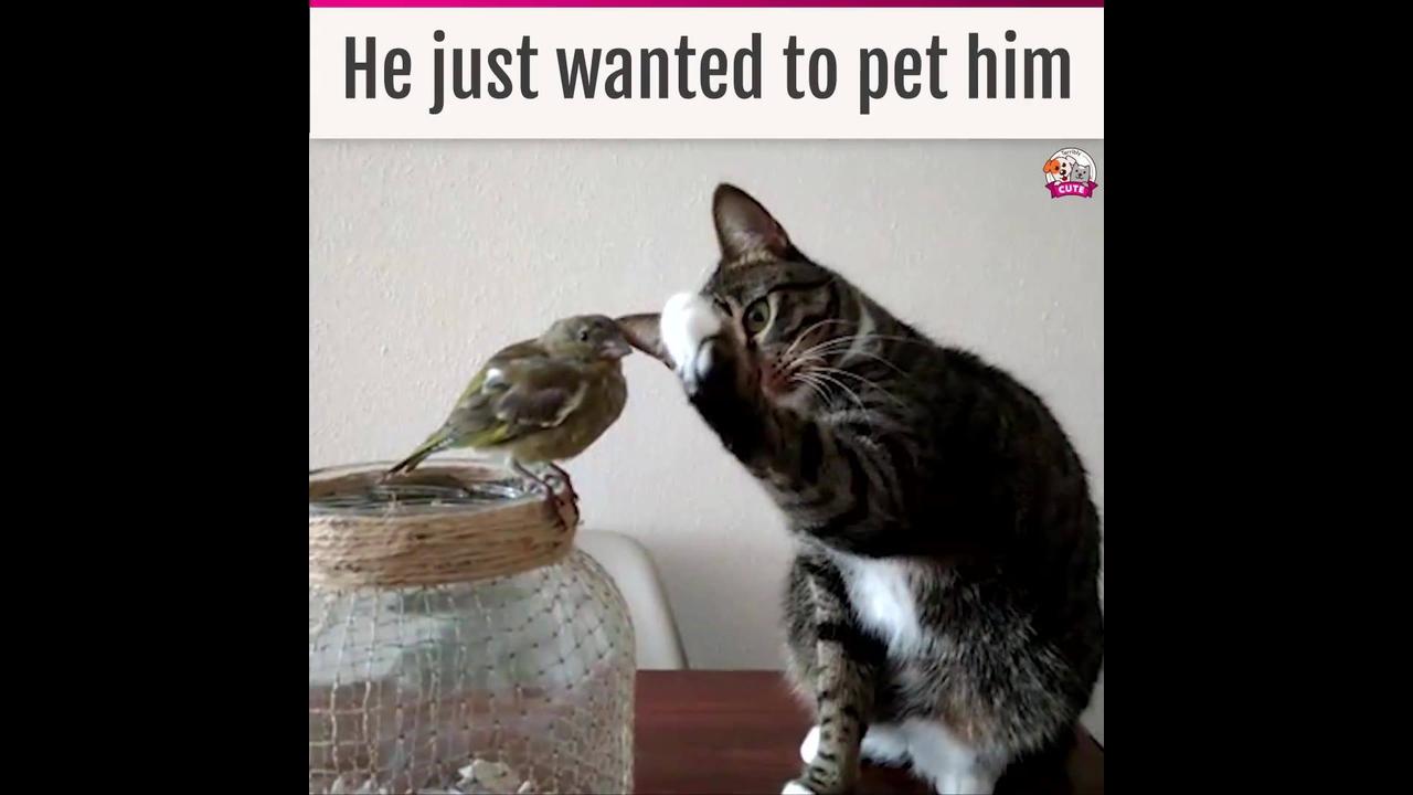 Gatinho tentando acariciar um passarinho