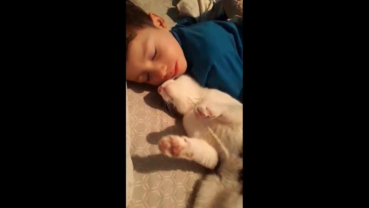 Gatinho tentando acordar seu amiguinho