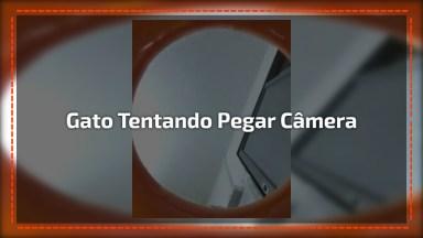 Gatinho Tentando Pegar Câmera Dentro De Pote, Olha Só A Carinha Dele!