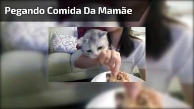 Gatinho Tentando Pegar Comidinha Da Mamãe, Olha Só Que Coisinha Mais Linda!