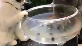 Gatinho Tentando Pegar Peixinho E O Outro Não Deixa, É Muita Fofura!