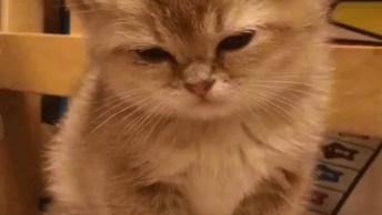 Gatinho Tentando Resistir Ao Sono, Veja Que Fofura Essa Carinha!