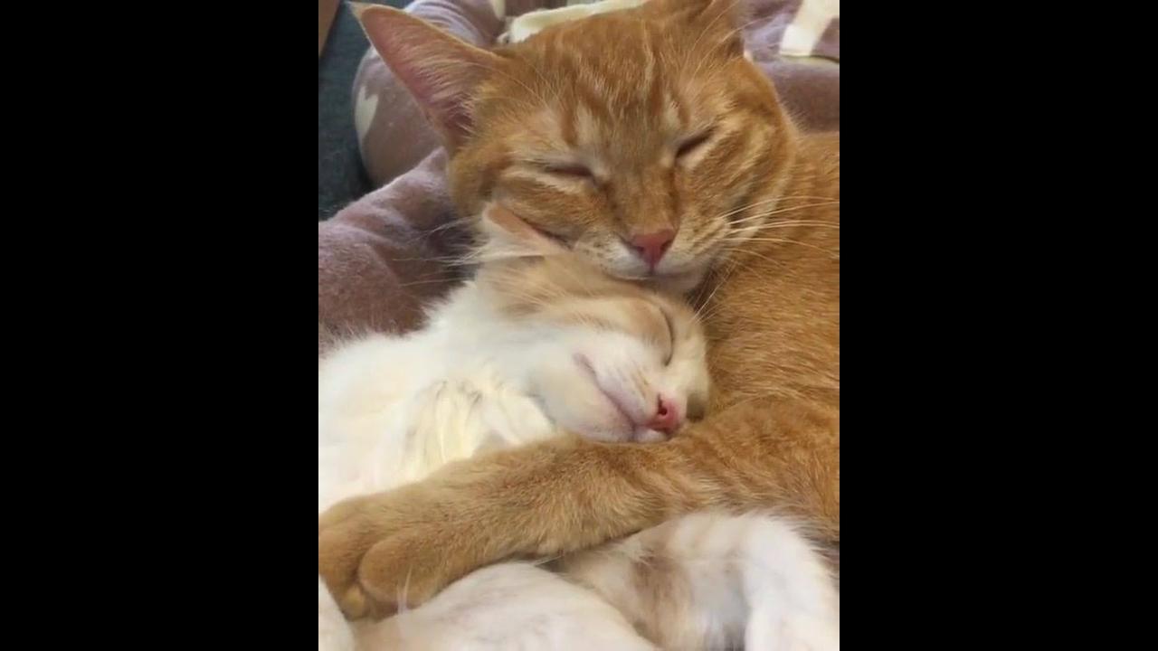 Gatinho tirando uma soneca com a mamãe, olha só que coisinha mais fofa!!!