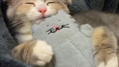 Gatinho Tirando Uma Soneca Com Seu Amiguinho De Pelúcia, Que Fofo!