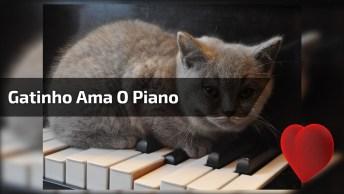 Gatinho Tocando Piano, Veja Que Animalzinho Curioso E Esperto!