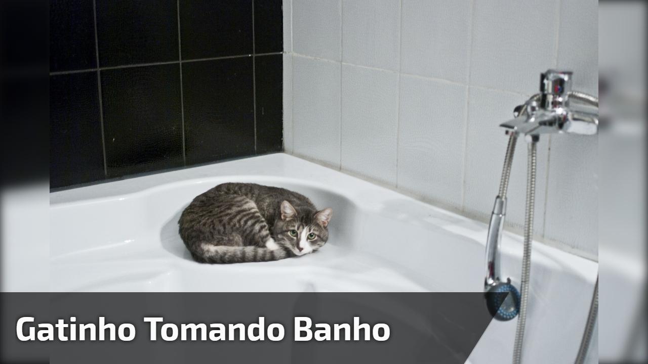 Gatinho tomando banho