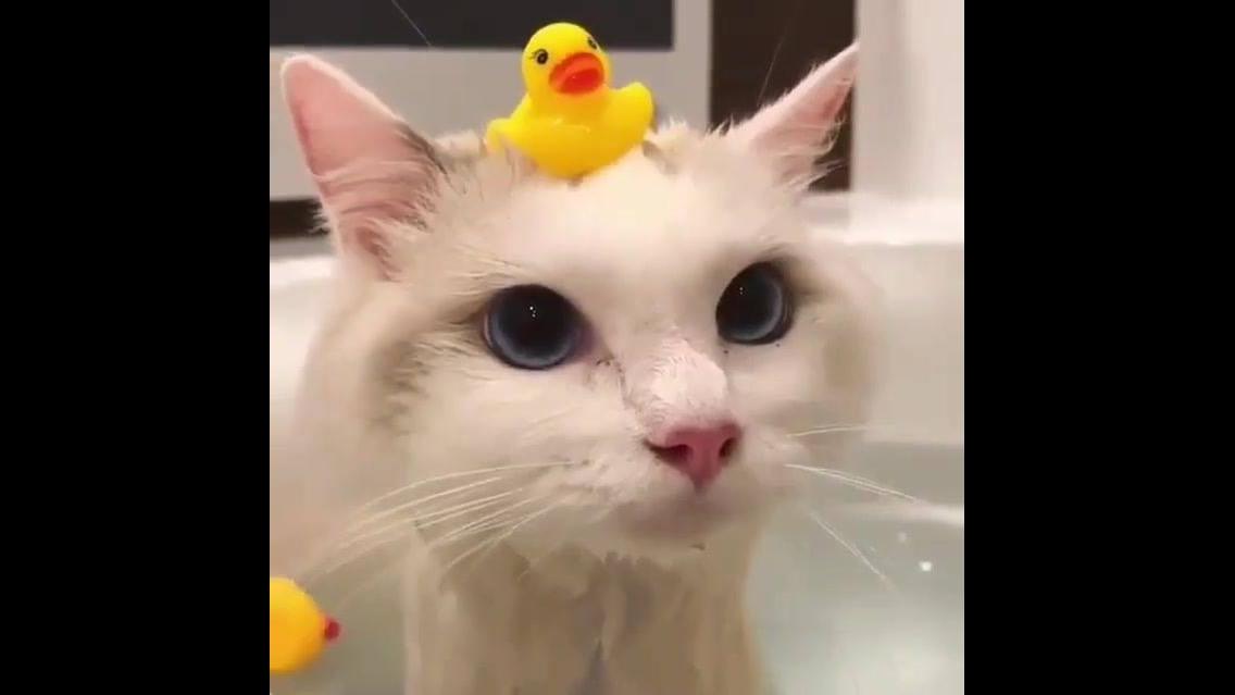 Gatinho tomando banho, que animal tranquilo, com lindos olhos!!!